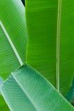 香蕉分层堆积叶子 免版税库存照片