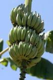 香蕉去 免版税库存照片