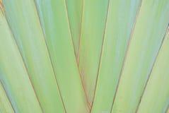 香蕉叶子分行的模式 库存图片