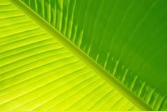 香蕉叶子掌上型计算机 免版税图库摄影