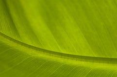 香蕉叶子掌上型计算机 图库摄影