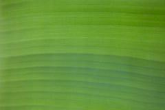 从香蕉叶子的样式 库存图片