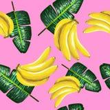香蕉和绿色的样式在桃红色离开 热带的背景 库存图片