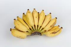 香蕉培养了 库存图片