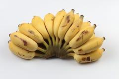 香蕉培养了 库存照片