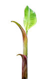 香蕉工厂 库存图片
