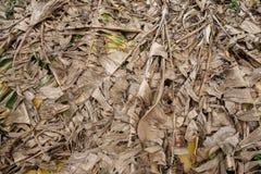 香蕉干燥叶子 库存图片