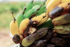 香蕉成熟和腐烂在树 免版税库存图片
