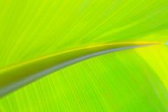 香蕉接近的叶子 库存照片