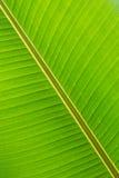 香蕉接近的叶子 图库摄影