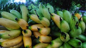 香蕉束新鲜从庭院 免版税库存图片