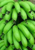 香蕉束绿色 免版税库存照片