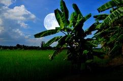 香蕉树和绿色领域与大月亮 免版税图库摄影