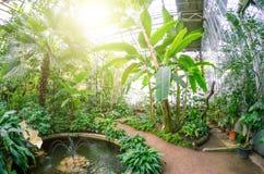 香蕉树用果子和花在豪华的热带庭院里 库存照片