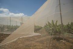 香蕉种植园温室 免版税图库摄影