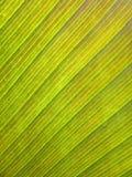 香蕉老叶子样式 免版税库存照片