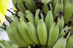 香蕉非常绿色查找 库存照片