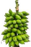 香蕉非常绿色查找 免版税库存图片
