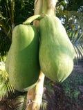 香蕉非常绿色查找 库存图片