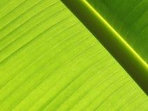 香蕉页 免版税库存照片