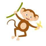 香蕉滑稽的猴子 免版税库存照片