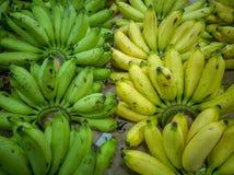 香蕉-绿色和黄色香蕉肩并肩排队了 免版税库存照片