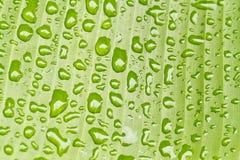 香蕉ii湿叶子的系列 免版税库存照片