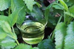 香蜂草和香蜂草茶 免版税库存图片