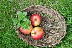 香蜂草的三根湿苹果和枝杈在一个老篮子的 免版税图库摄影