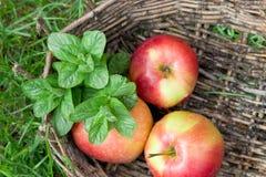 香蜂草的三根湿苹果和枝杈在一个老篮子的 库存图片