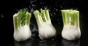 茴香, foeniculum vulgare,落入水的菜反对黑背景, 影视素材