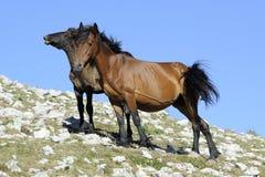 马、母马和马驹 免版税图库摄影