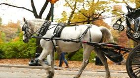 马、赛跑者和自行车骑士在秋天在中央 股票视频