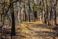 马丁秋天的自然公园 免版税库存照片