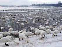 马丁仅仅野禽和沼泽地信任储备 免版税库存照片
