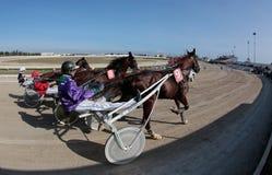 马上马具的赛马比赛在宽马略卡竞技场 免版税库存图片