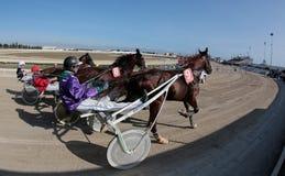 马上马具的赛马比赛在马略卡竞技场 免版税图库摄影
