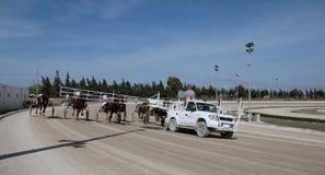 马上马具的赛马比赛开始 免版税库存图片