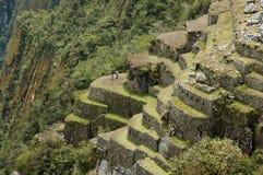 马丘比丘陡峭的大阳台-秘鲁 库存图片