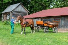 马为马步行准备在公园 免版税库存照片