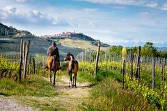 马乘驾的人在有拉莫拉村庄的美丽的巴罗洛葡萄园中在小山的上面 迁徙的路 葡萄栽培, 图库摄影