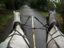 马乘驾 库存图片