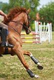 马体育运动 免版税库存照片