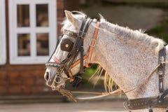 马佩带的三角背心和马眼罩在大农场 免版税库存图片