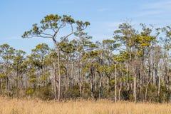 马偕海岛全国野生生物保护区在北卡罗来纳 库存图片