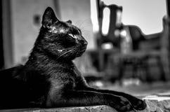 马克西门科,监护人猫 免版税库存图片