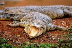马六甲鳄鱼农场 免版税图库摄影