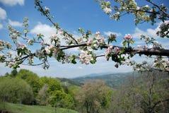 从马其顿的春天风景 免版税库存图片