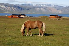 马冰岛语 免版税库存照片