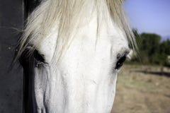 马前面 库存照片